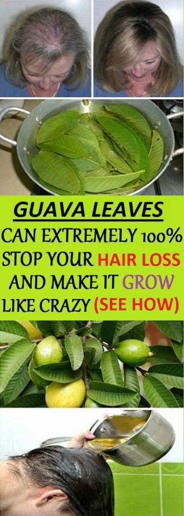 Guava Leaves Can Extremely 100% Stop Your Hair loss And Make It Grow Like Crazy (See How)